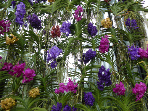 Orchidfest
