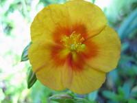 Photos_july_2007_024