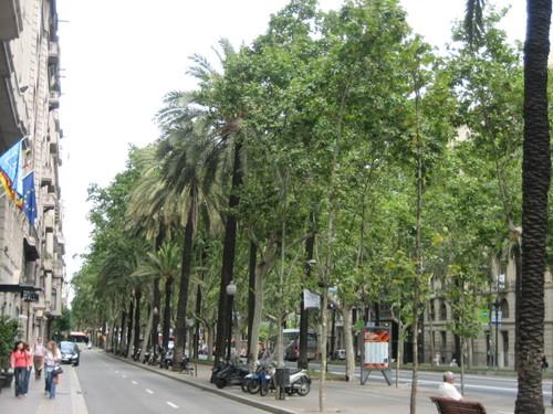 barcelona - avenguda diagonal - palms